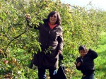apple picking 2. jpeg